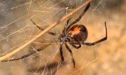 9 причин, почему нельзя убивать пауков в доме