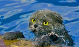 5 теорий, почему кошки боятся воды