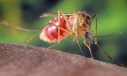 8 причин, почему комары кусают не всех людей