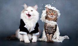 Бизнес идея: Организация знакомств для домашних животных!