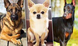 Тест: какая ты порода собаки?