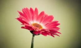 Тест «Какой ты цветок»: покажет твои скрытые черты