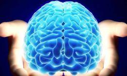 Тест на возраст мозга: определи, сколько лет «серому веществу»