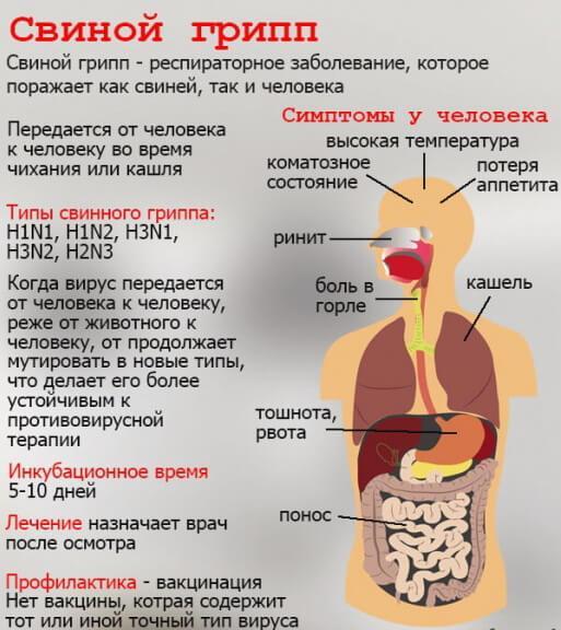 svinoj-grip