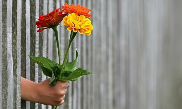 kakie-cvety-podarit-devushke