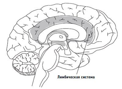 limbicheskaja-sistema