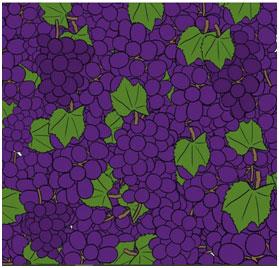 grozdi-vinograda