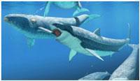 kit-posle-jeholokacii