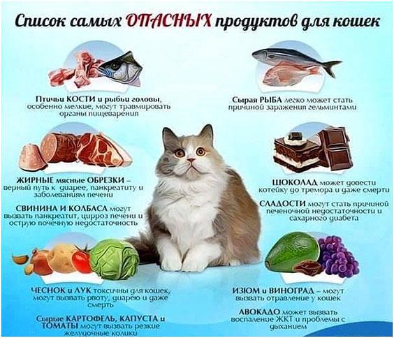opasnye-produkty-dlja-kota