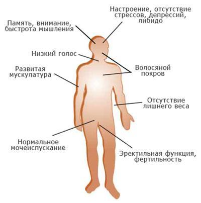 period-polovogo-sozrevanija