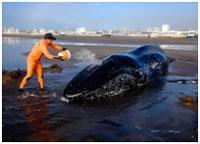 postojanno-polivat-kita