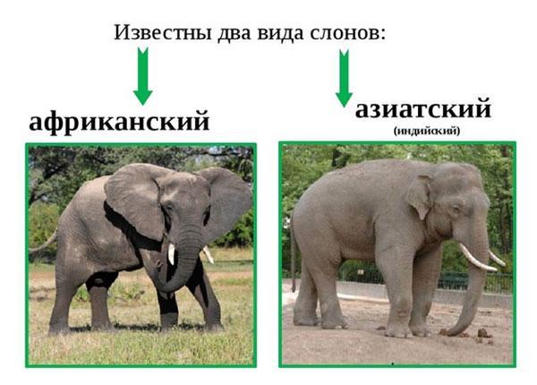 vidy-slonov