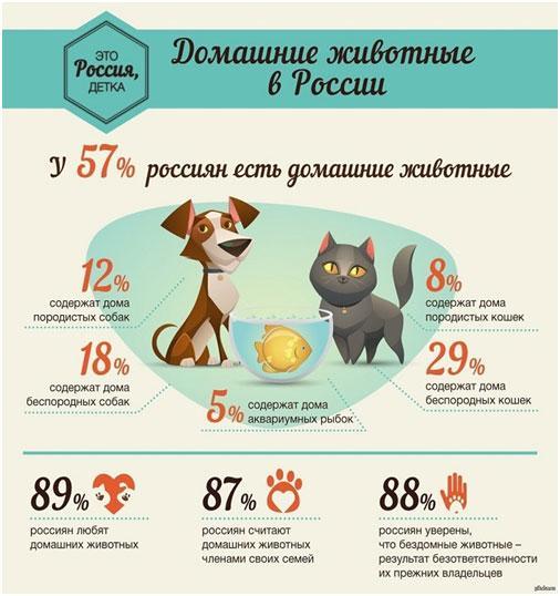 domashnie-zhivotnye-v-rossii-statistika