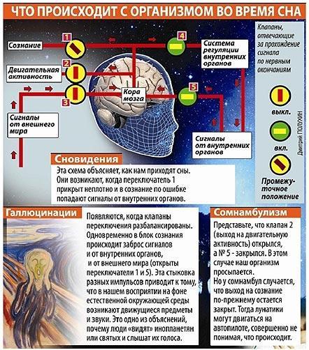organizm-vo-vremja-sna