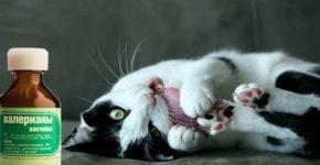 pochemu-koty-ljubjat-valerjanku