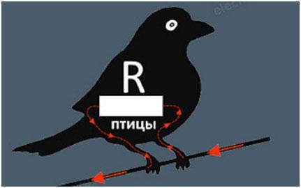 ptica-saditsja-na-provod