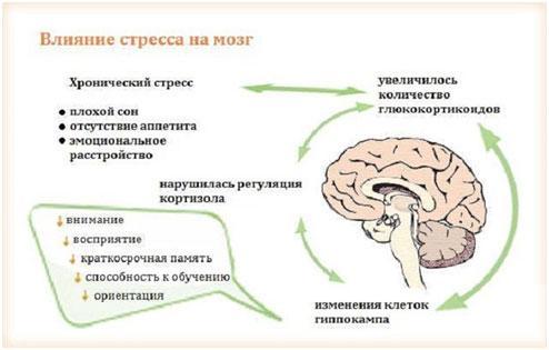 vlijanie-stressa-na-mozg