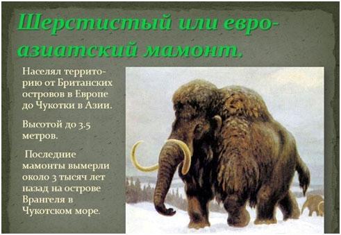 evro-aziatskij-mamont