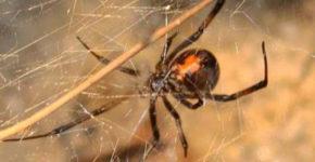 pochemu-nelzja-ubivat-paukov