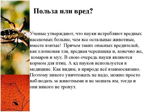 polza-i-vred-paukov