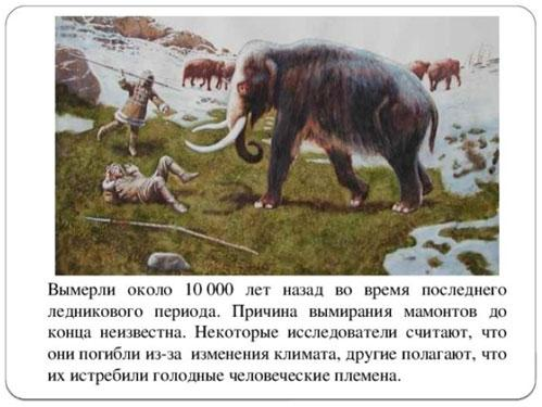 prichina-ischeznovenija-mamontov