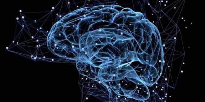 mikroflora-uspokaivaet-mozg