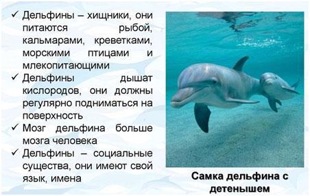 samka-delfia-s-detenyshem