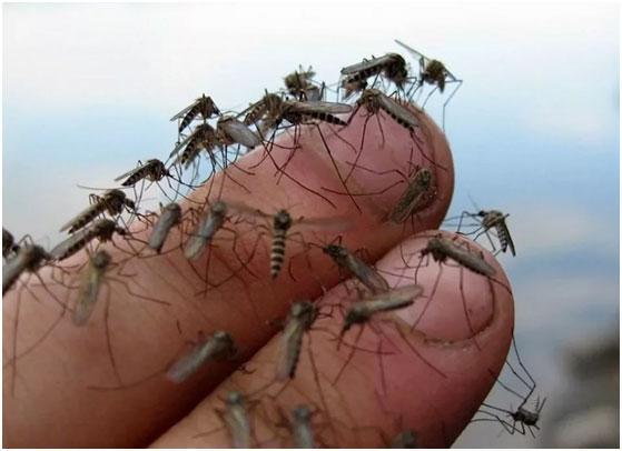 zarazhenie-ot-komara