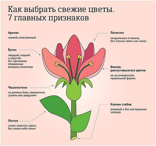 priznaki-svezhih-cvetov