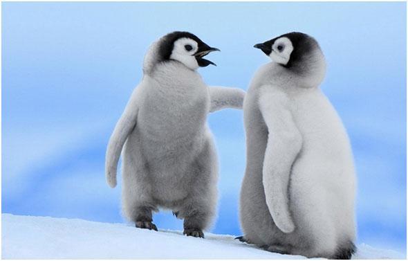 pokoriteli-Antarktidy
