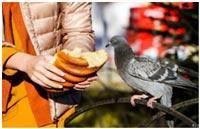prkorm-ptic-posle-zastolja