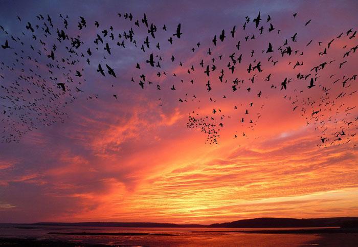 staja-ptic