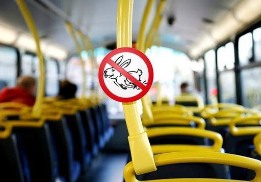 ezdit-v-obshhestvennom-transporte-bez-bileta